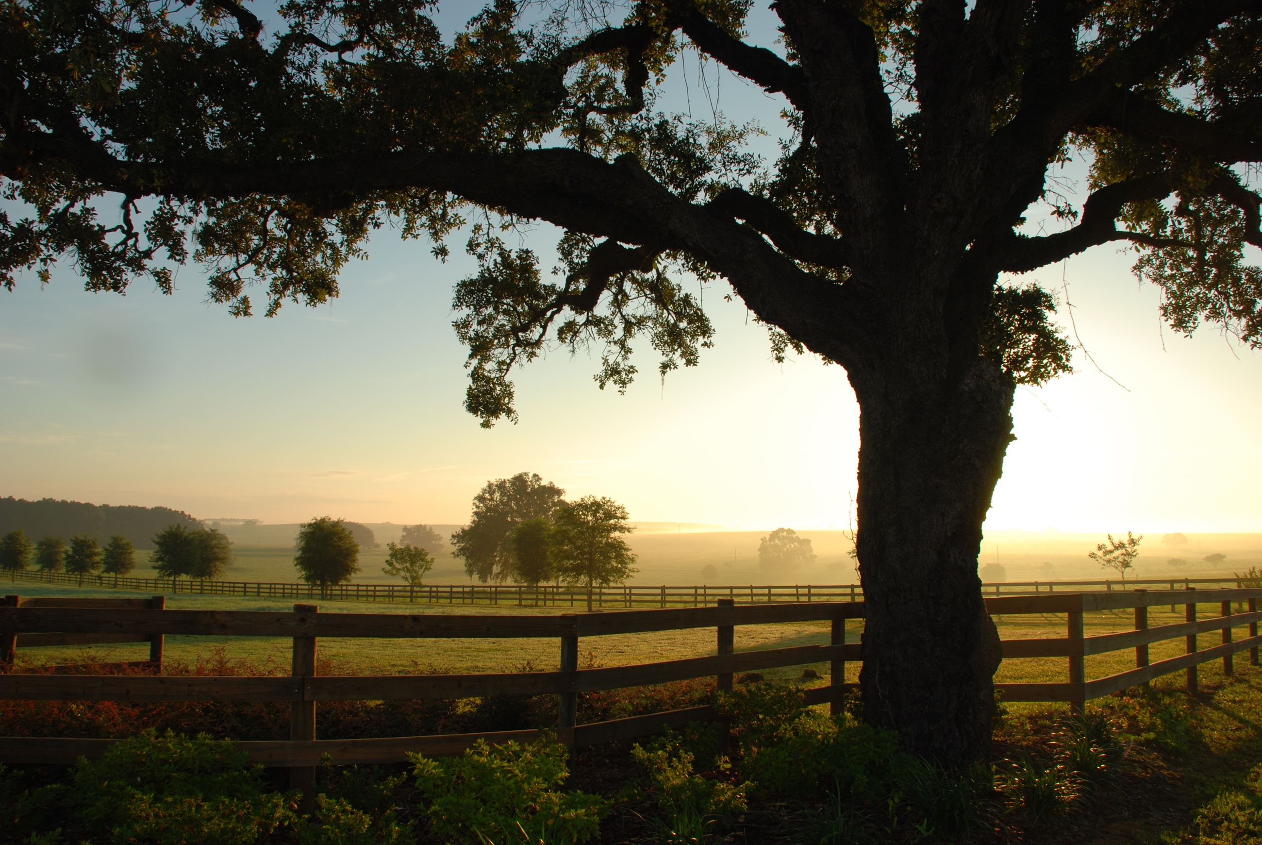 Rural pasture_tree at sunrise