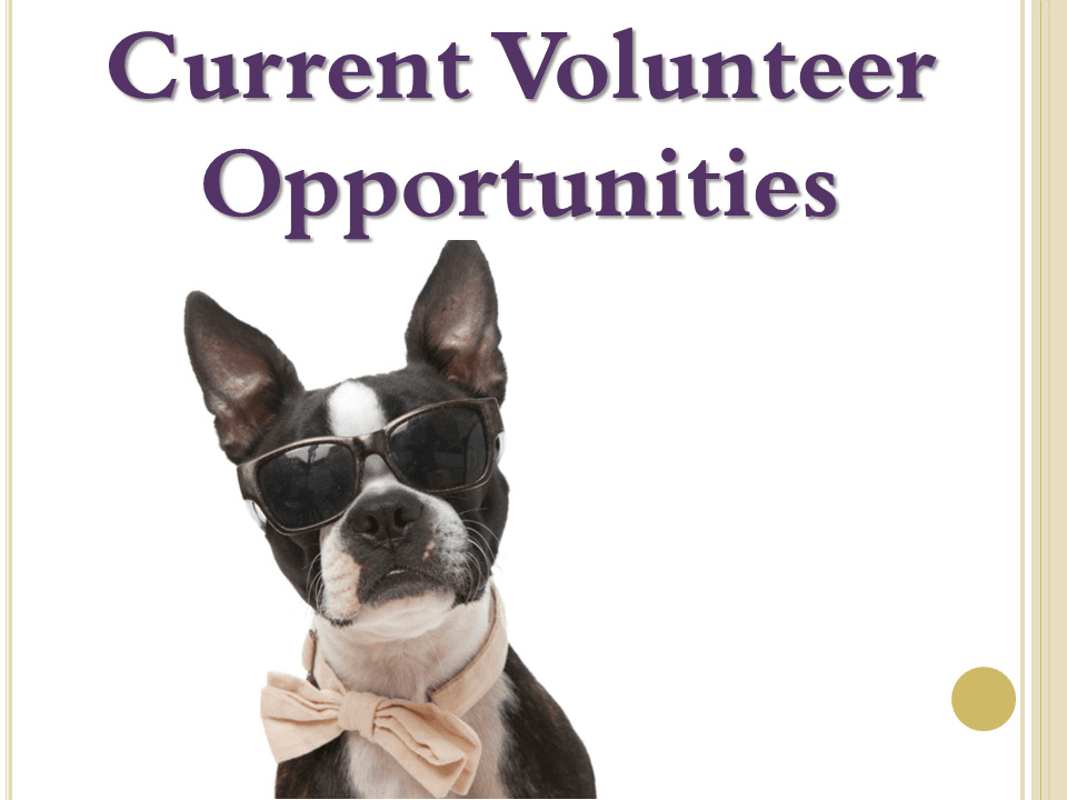 Current Volunteer Opportunities