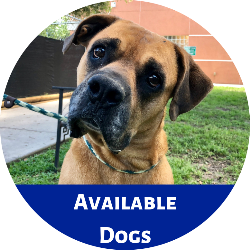 Click this link to go to the Petango website to view dogs available for adoption.
