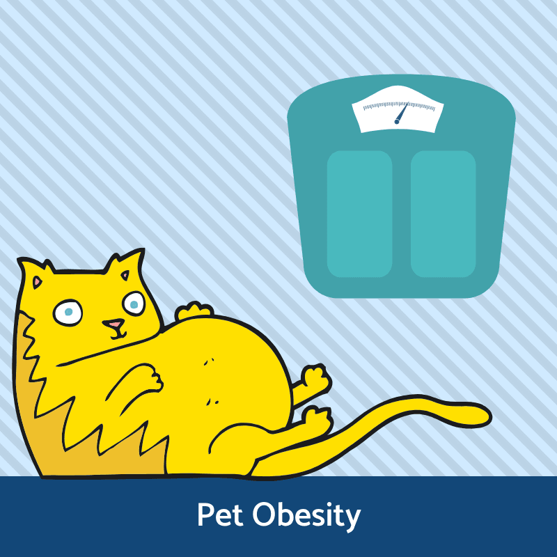 Pet Obesity Information