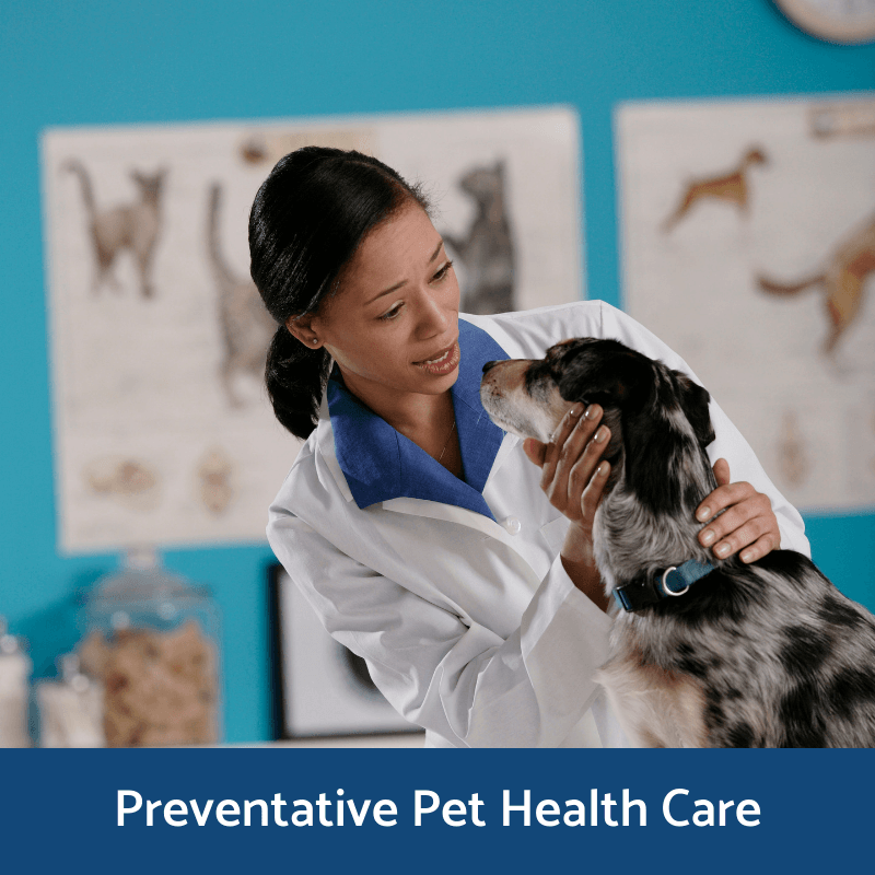 Preventative Pet Health Care Information