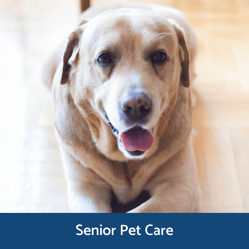 Information about senior pets