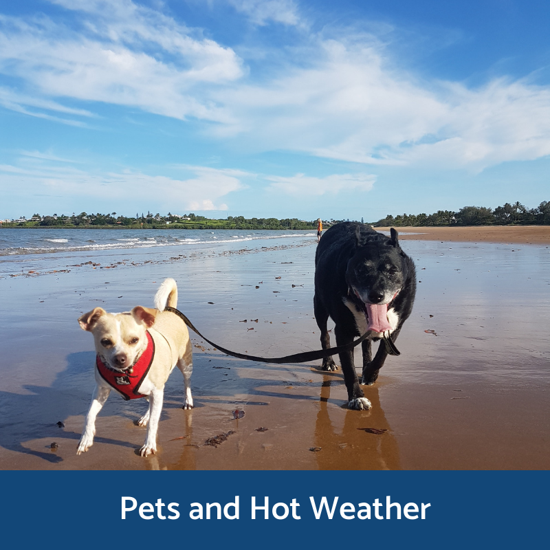 Information for pets and hot weather