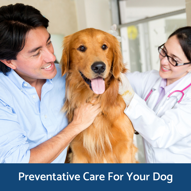 Preventative health care for dogs
