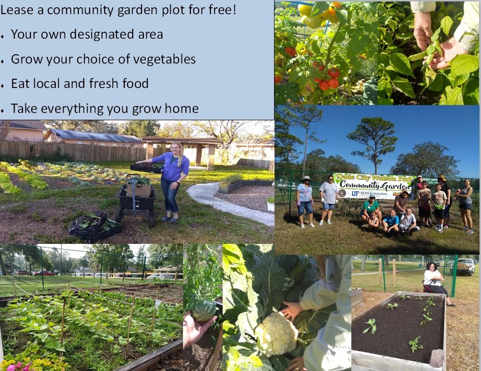 Lease a Community Garden Plot for Free