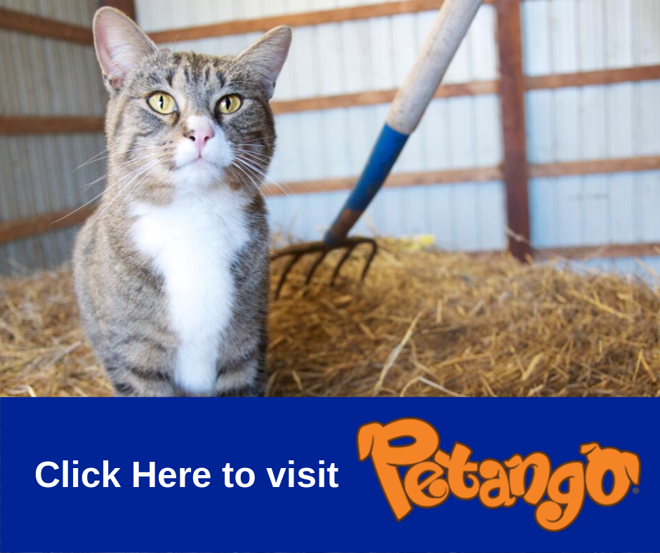 Link to adoptable cats on Petango