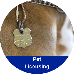 Link to Online Pet Licensing Website