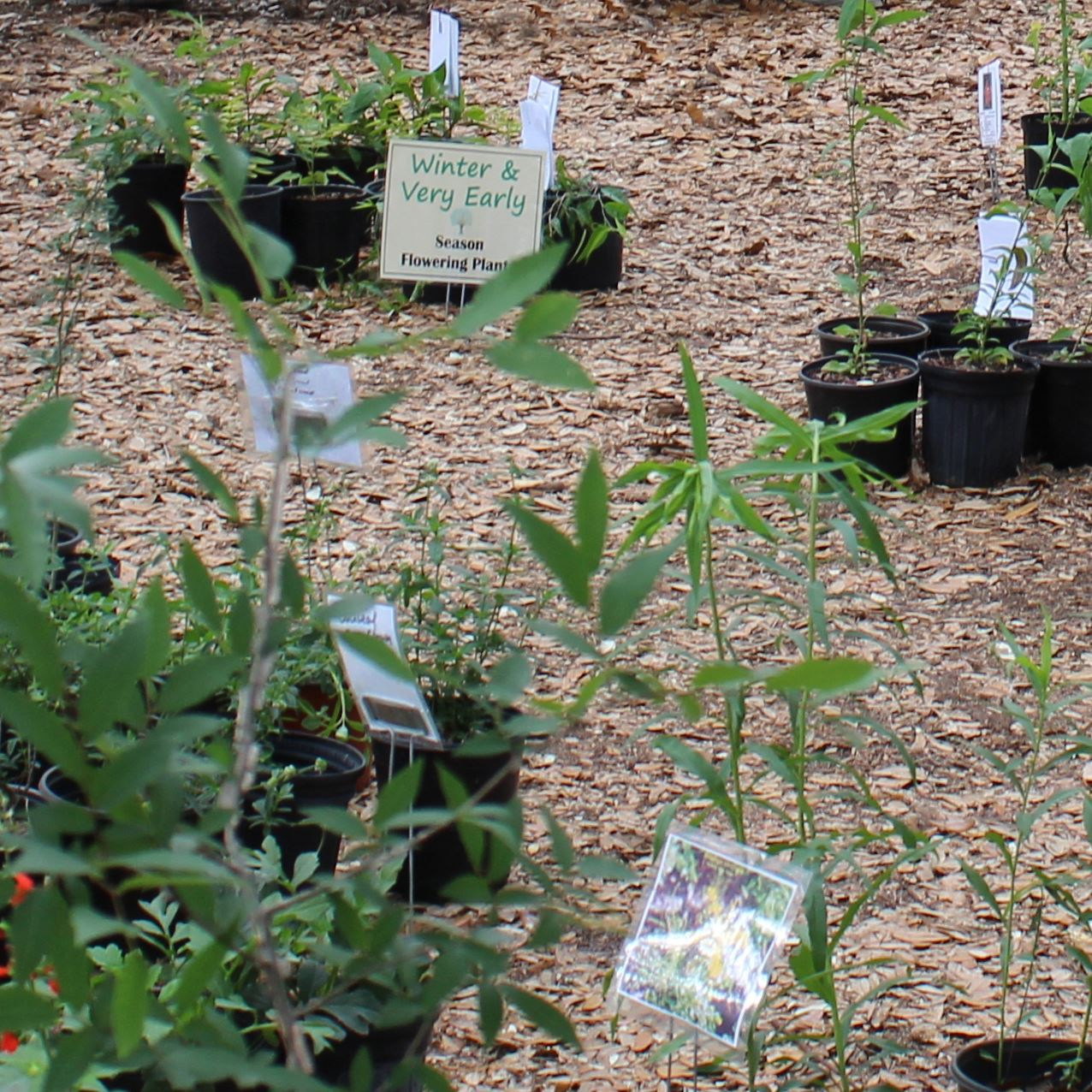 Native plants available