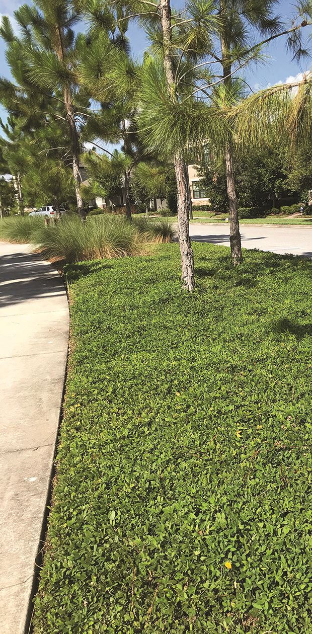 Photo of a vegetated area between sidewalk and road